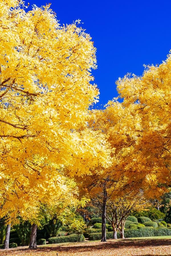 Färgglade sidor i upphöjda botaniska trädgårdar för montering, södra Australien royaltyfri foto