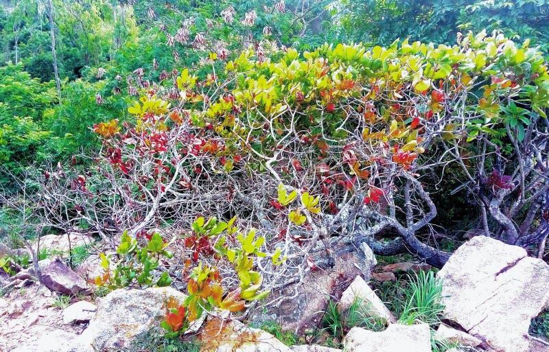 färgglat för fantastiskt träd för skog sällsynt arkivbild