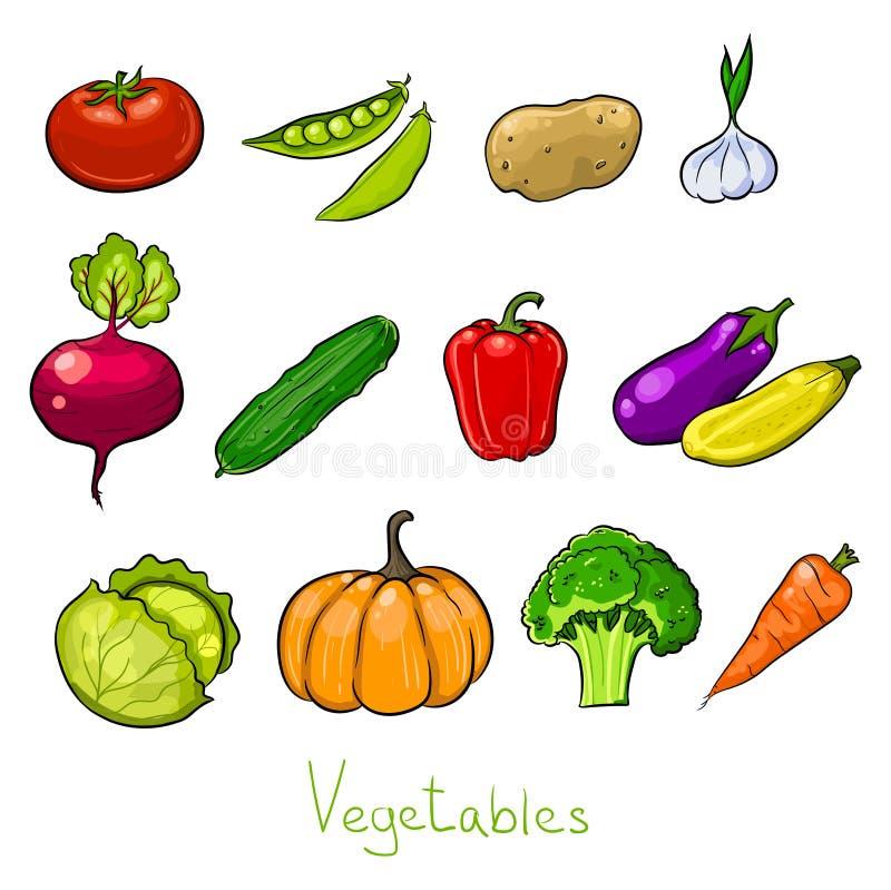 färggrönsaker skissar royaltyfri illustrationer