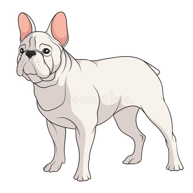 Färgillustration av en fransk bulldogg isolerat vektorobjekt stock illustrationer
