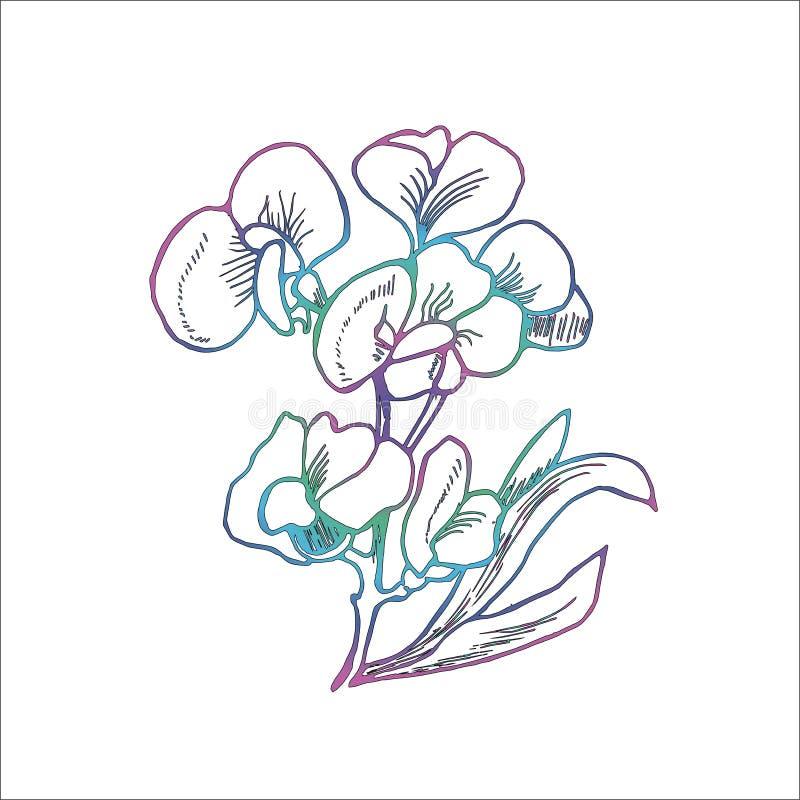 Färgillustration av irisblommor, i att kläcka stil arkivfoton