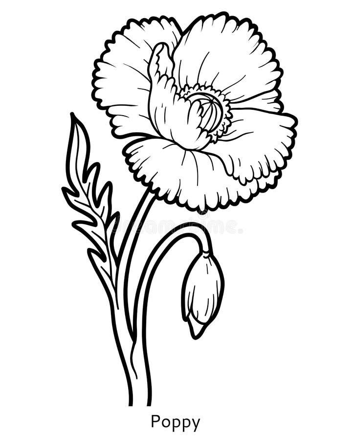 Färgläggningbok, blommavallmo royaltyfri illustrationer