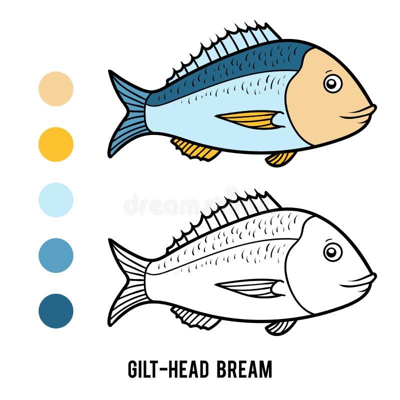 Färgläggningbok, Gilt-huvud braxen vektor illustrationer
