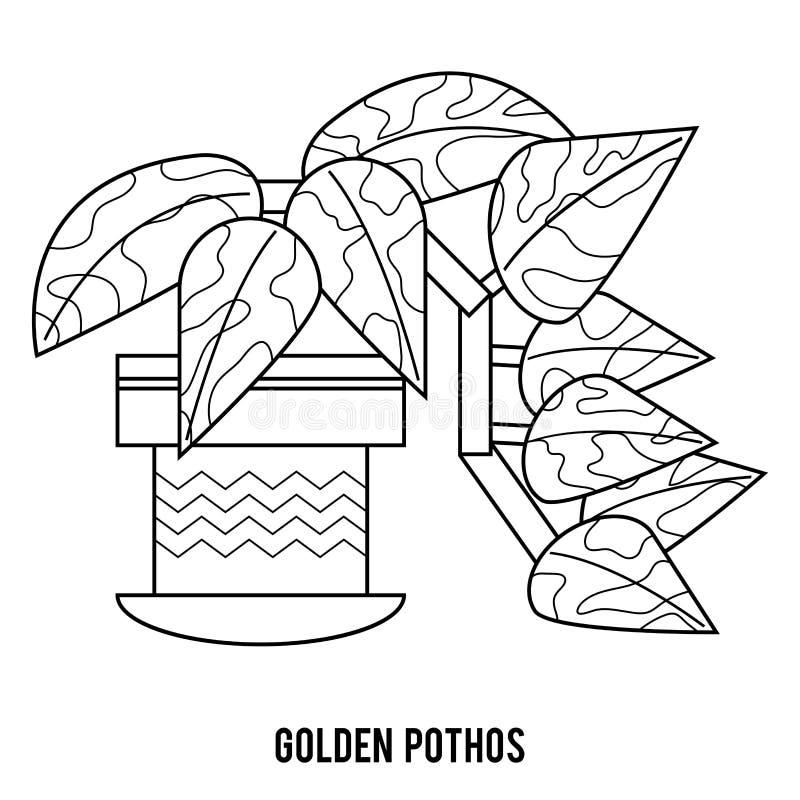Färgläggningbok, guld- pothos royaltyfri foto