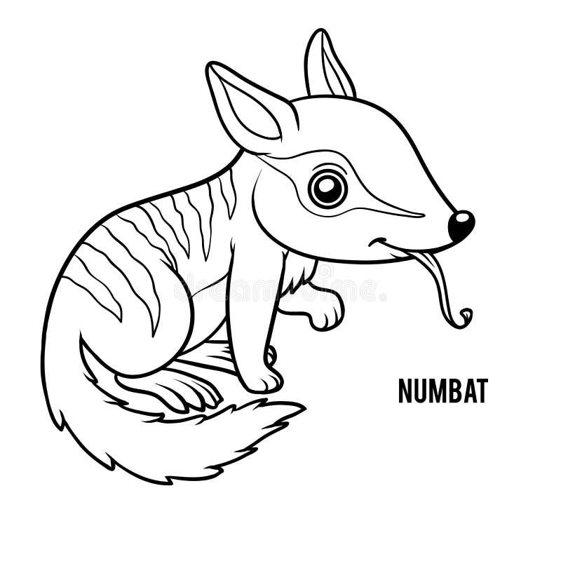 Färgläggningbok, Numbat royaltyfri illustrationer