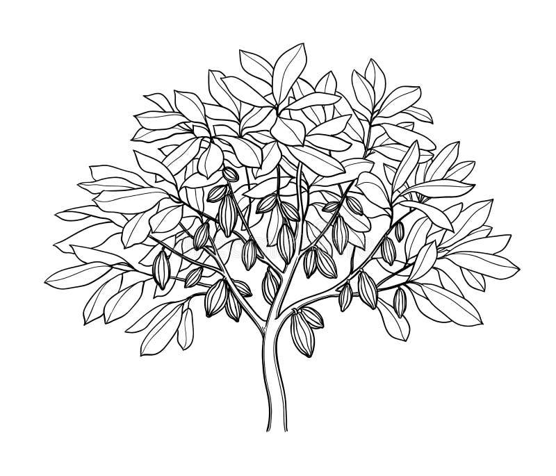 Färgpulver för kakaoträdet skissar vektor illustrationer
