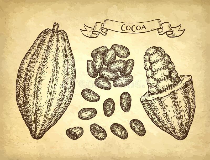 Färgpulver skissar av kakao vektor illustrationer