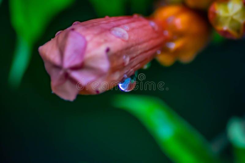 Färgrik bakgrund av färgerna av naturen som är i huvudrollen en droppe av vatten efter ett kort regn royaltyfri bild