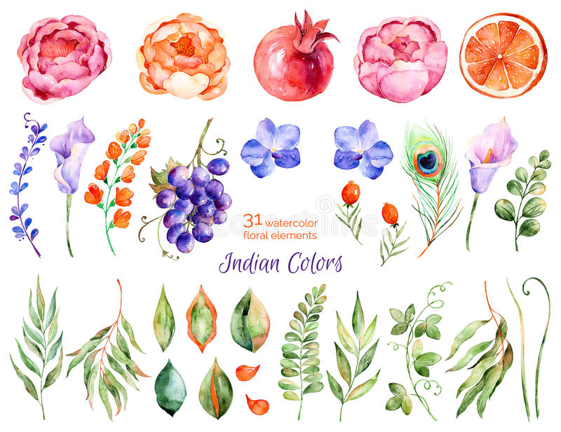 Färgrik blom- samling med rosor, blommor, sidor, granatäpple, druva, callas, apelsin, påfågelfjäder stock illustrationer