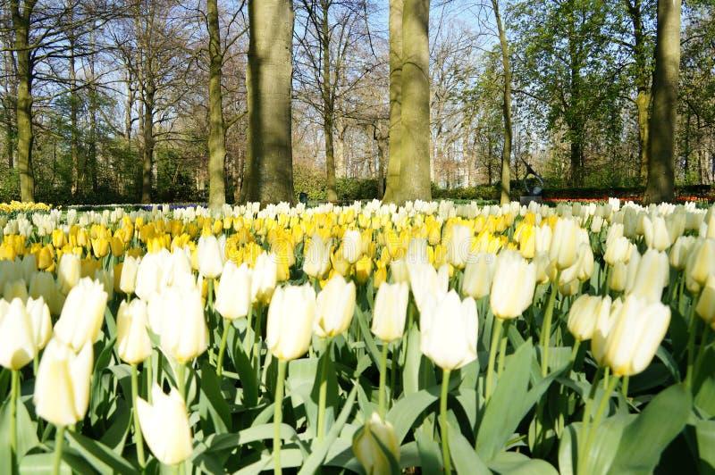 färgrik blomma royaltyfri foto