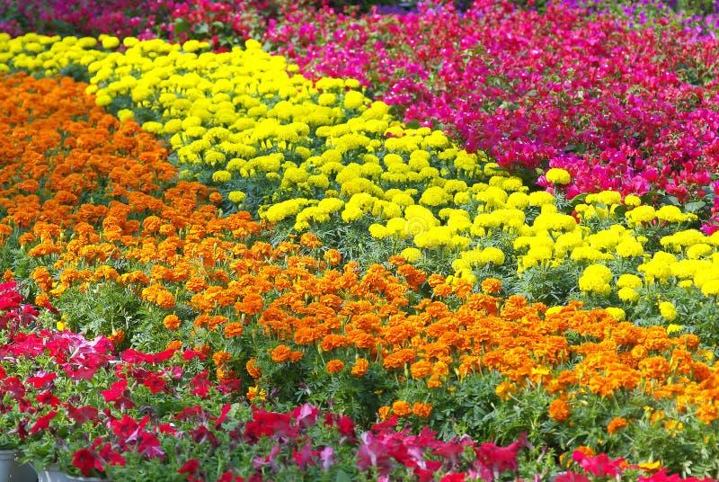 färgrik blomma arkivfoto