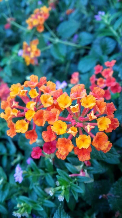 färgrik blomma arkivbild