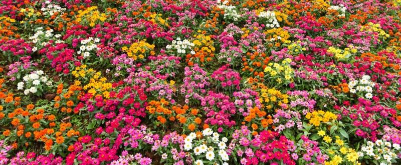 färgrik blomma arkivbilder