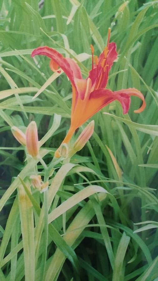 färgrik blomma royaltyfria foton