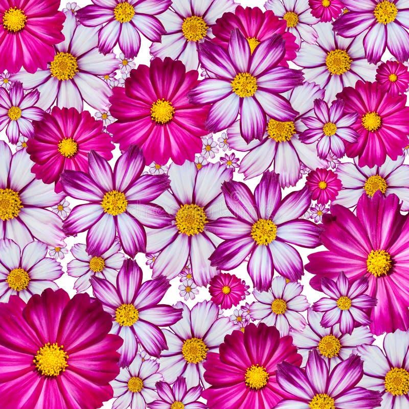 färgrik blomma för bakgrund arkivfoto