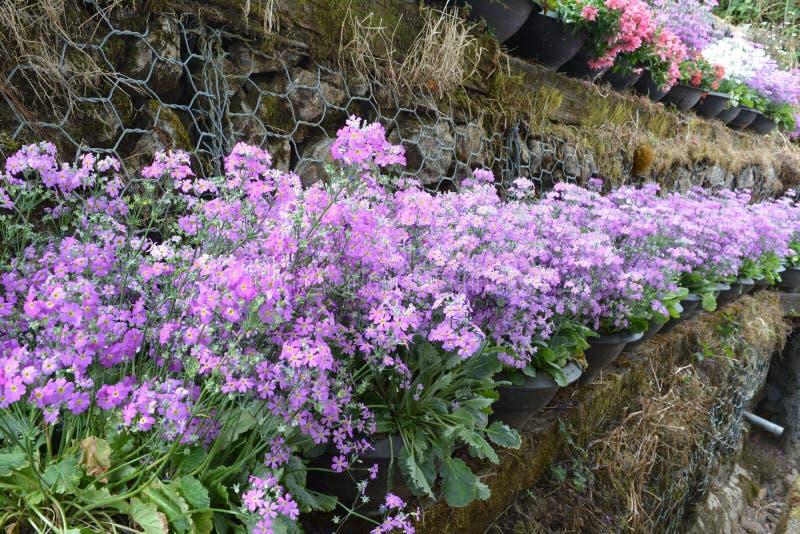 färgrik blomma Blomma i trädgård på solig sommar eller vårdagen royaltyfria foton