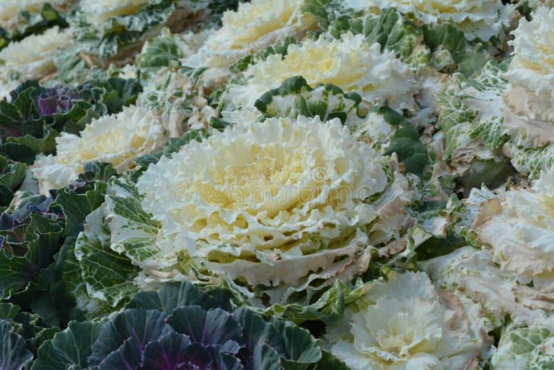 färgrik blomma Blomma i trädgård på solig sommar eller vårdagen royaltyfri foto