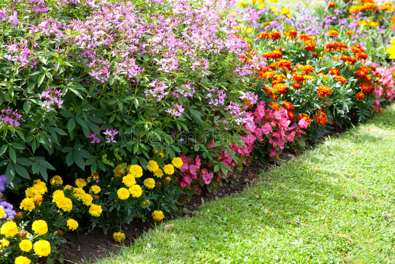 Färgrik blommadesign i trädgård royaltyfri fotografi