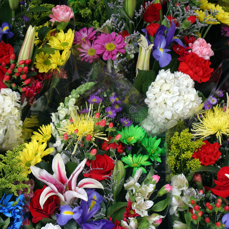 färgrik blommafjäder royaltyfria foton