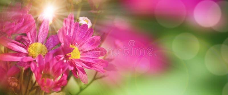 färgrik blommafjäder arkivbild