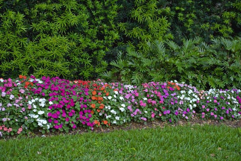 färgrik blommahäck arkivfoton