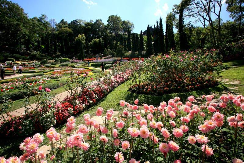 Färgrik blommaträdgård i Mae Fah Luang, Chiang Rai, Thailand arkivfoton