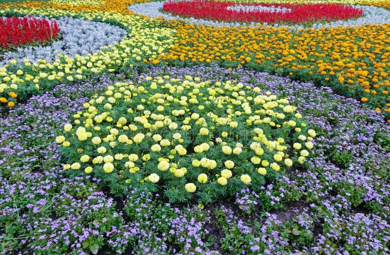 Färgrik blomsterrabatt för sommar Bakgrund arkivbild