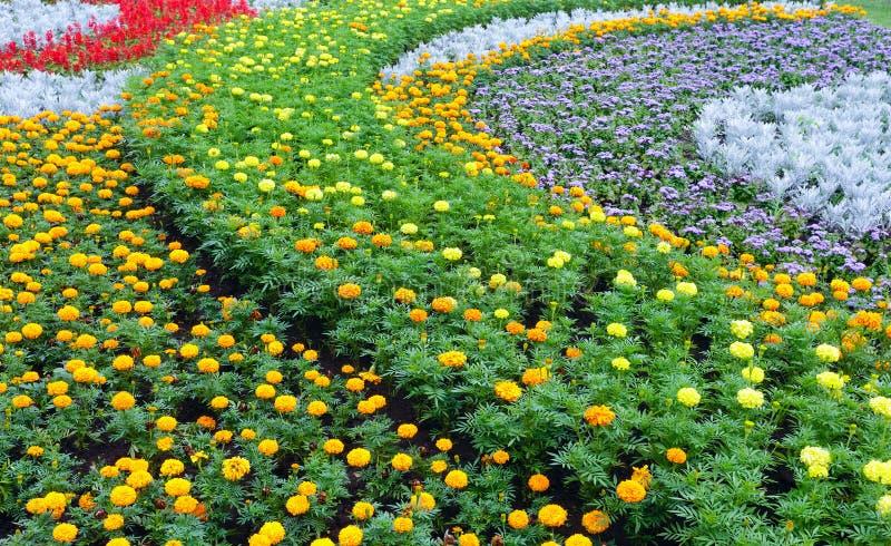 Färgrik blomsterrabatt för sommar Bakgrund royaltyfri foto