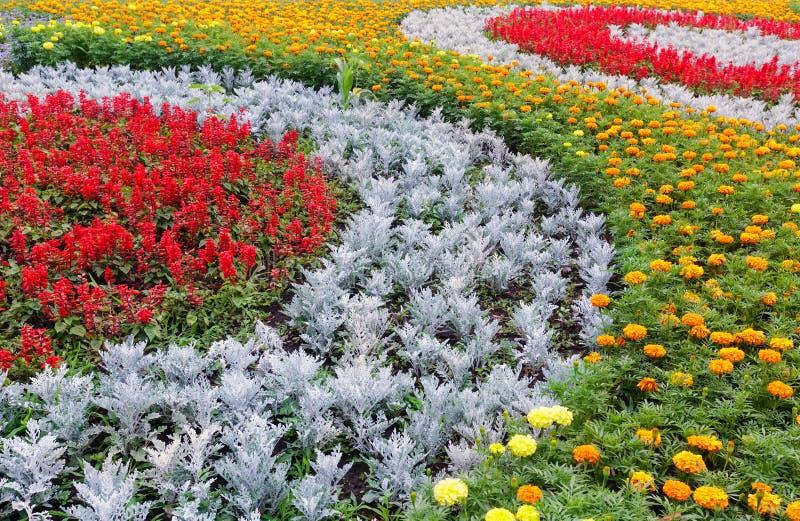 Färgrik blomsterrabatt för sommar Bakgrund arkivfoto
