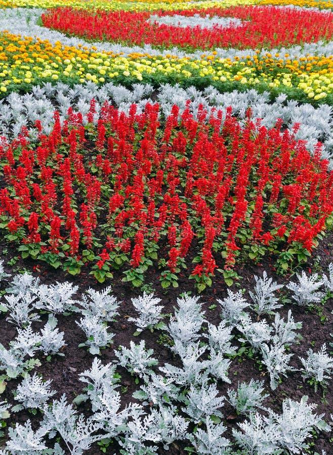 Färgrik blomsterrabatt för sommar Bakgrund arkivfoton