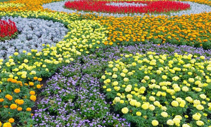 Färgrik blomsterrabatt för sommar Bakgrund royaltyfri fotografi