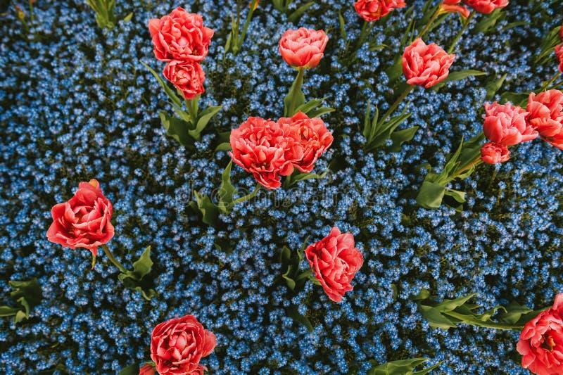 Färgrik blomsterrabatt med blandade blåa och rosa blommor royaltyfria foton