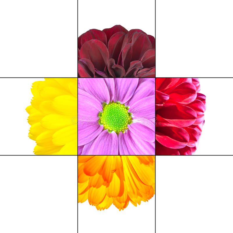 Färgrik design för tusenskönablommamosaik stock illustrationer
