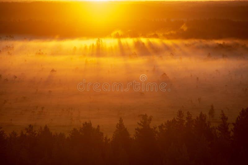 färgrik dimmig soluppgång över skogen med mist- och ljusstrålar fotografering för bildbyråer
