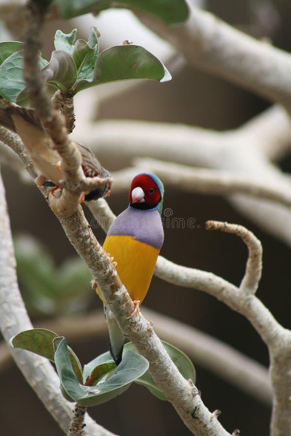 färgrik fågel arkivfoton