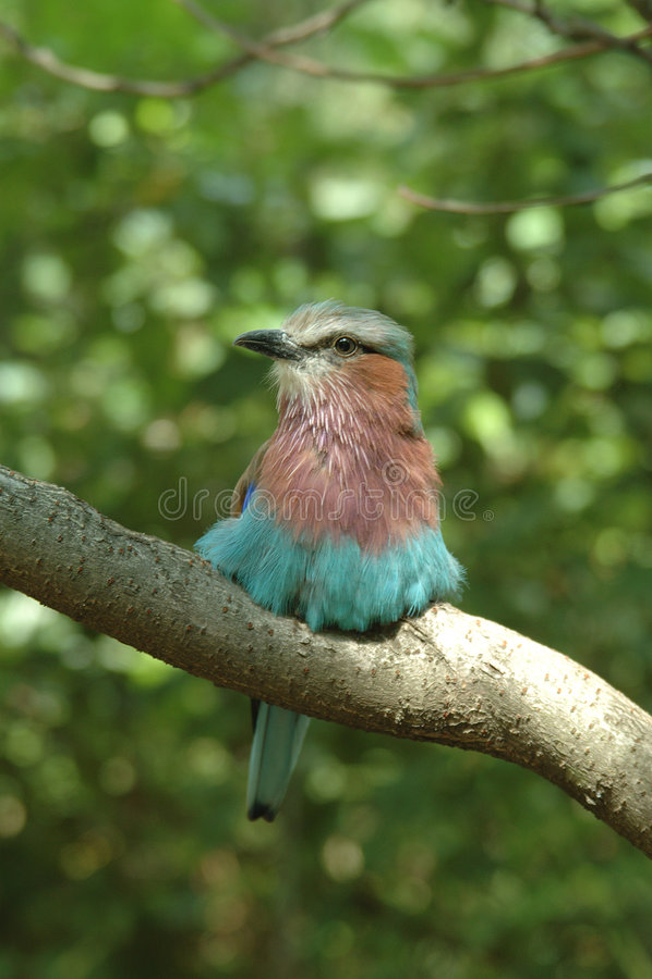 Färgrik Fågel Fotografering för Bildbyråer