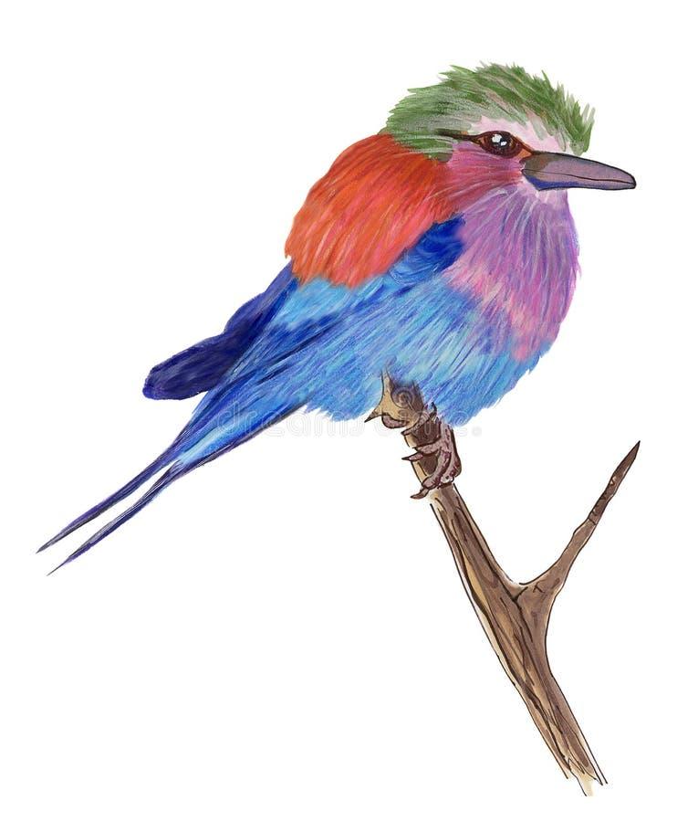 färgrik fågel royaltyfri bild