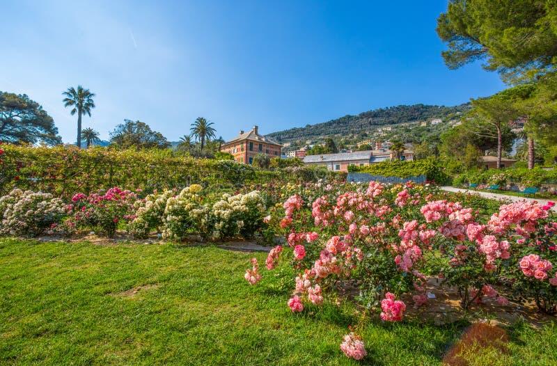 Färgrik ` för Il Roseto för rosträdgård` i Genoa Genova Nervi, inom Genoa Nervi Groppallo Park, Italien royaltyfria bilder