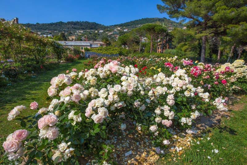 Färgrik ` för Il Roseto för rosträdgård` i Genoa Genova Nervi, inom Genoa Nervi Groppallo Park, Italien arkivbild