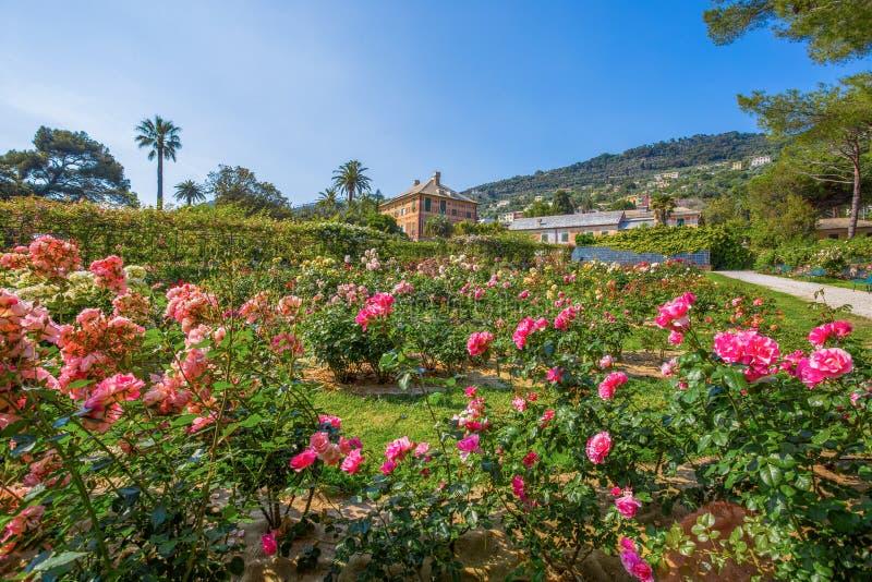 Färgrik ` för Il Roseto för rosträdgård` i Genoa Genova Nervi, inom Genoa Nervi Groppallo Park, Italien royaltyfri bild