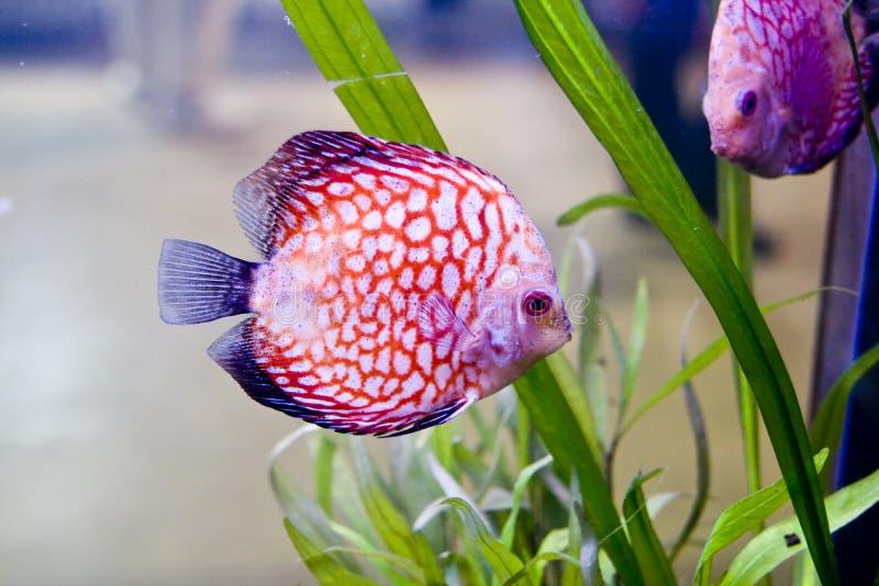 färgrik fisk arkivfoton