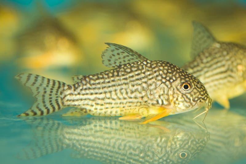 färgrik fisk arkivfoto