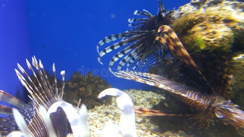 Färgrik fisk för tropiskt akvarium arkivbilder