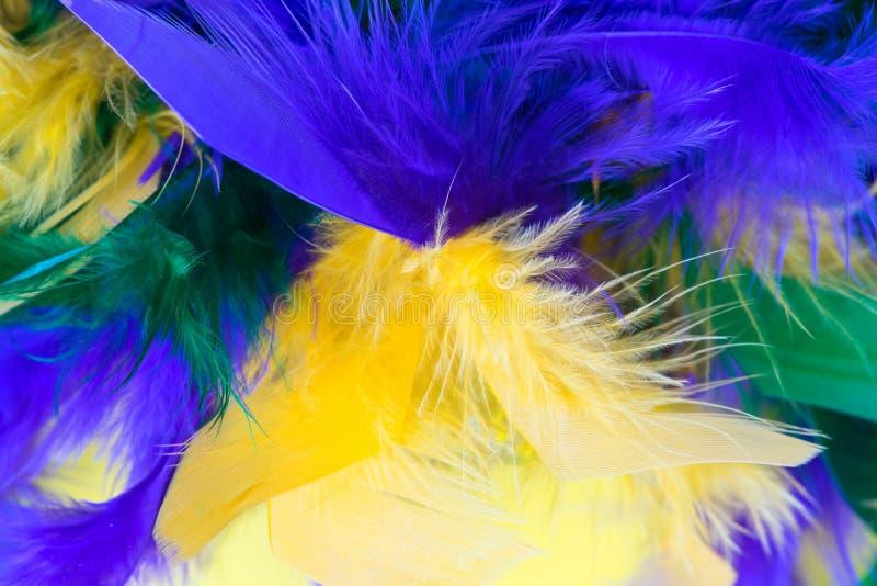 Färgrik fjäderboa för Mardi Gras Festival royaltyfri foto