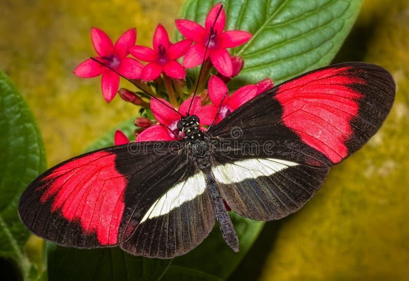 Färgrik fjäril royaltyfri bild