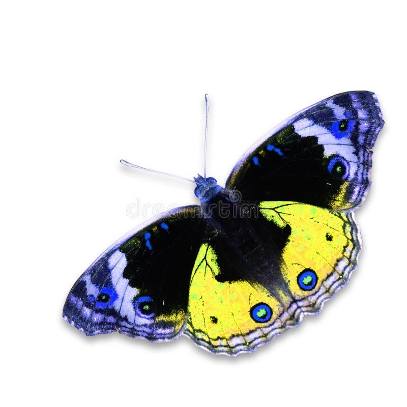 färgrik fjäril arkivfoton