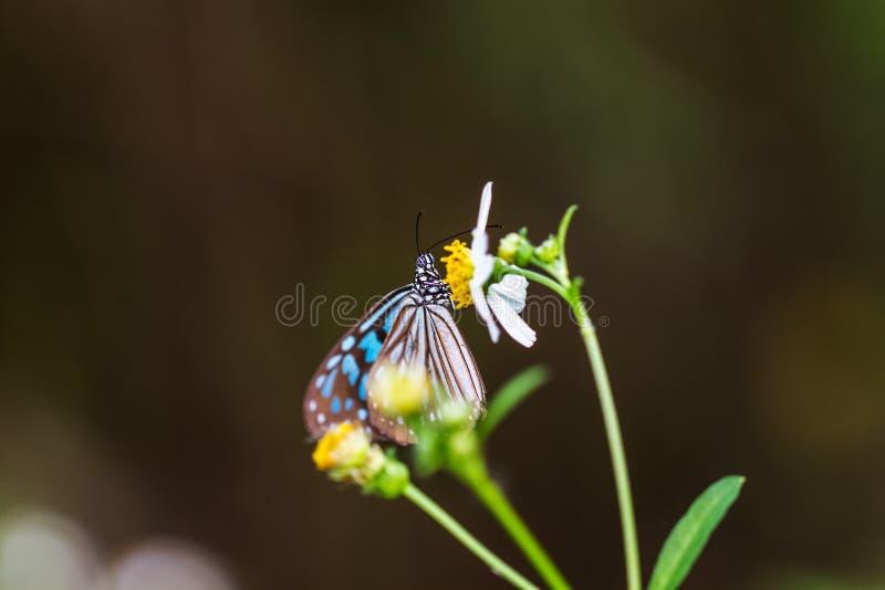 färgrik fjäril i trädgård arkivbilder