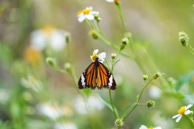 färgrik fjäril i trädgård royaltyfri bild