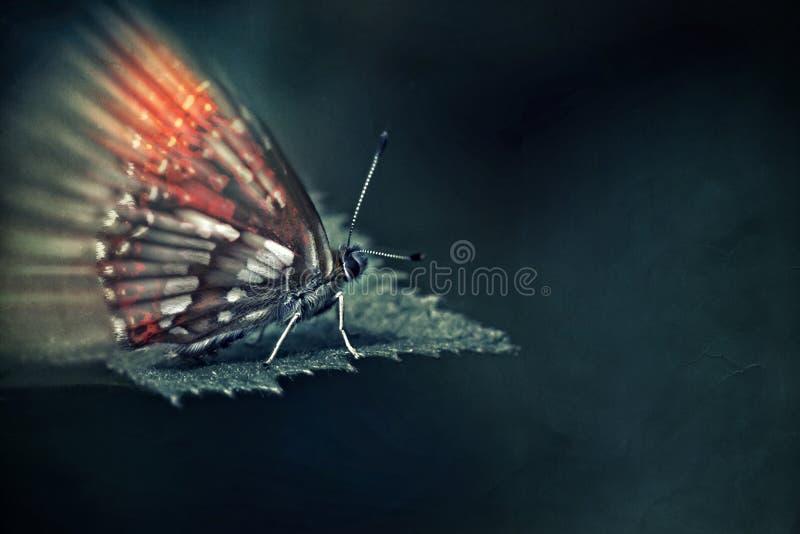 Färgrik fjäril på ett blad över mörk bakgrund royaltyfri fotografi