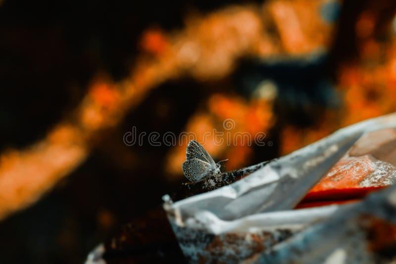 Färgrik fjärilsmakro royaltyfri bild